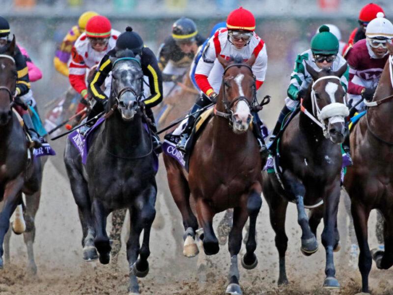Understanding Different Types of Horse Racing Odds