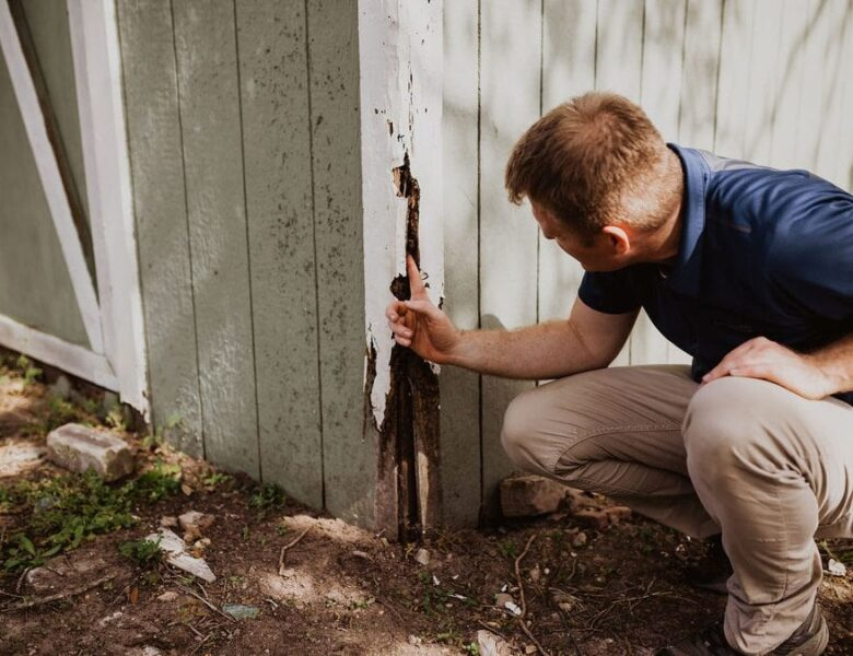 Inspection of Termites in Your Home