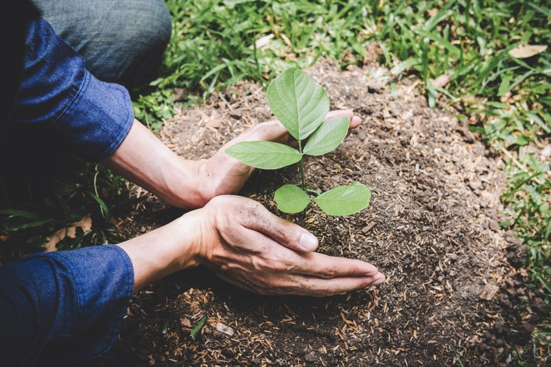 10 Amazing Rules For Reforestation And Carbon Footprint Optimization
